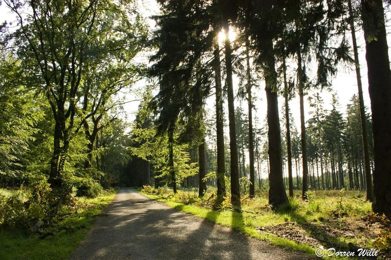 Ballade dans les Hautes fagnes et les sous-bois le 10-08-2011 Img_3067-800x600--2bbdc27