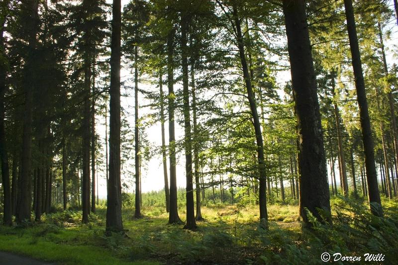 Ballade dans les Hautes fagnes et les sous-bois le 10-08-2011 Img_3077-800x600--2bbe84d