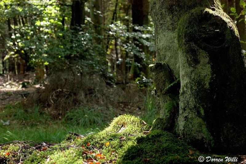 Ballade dans les Hautes fagnes et les sous-bois le 10-08-2011 Img_2686-800x600--2bbd867