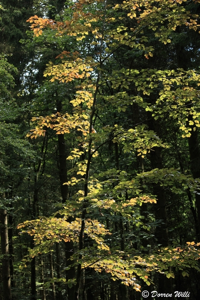 Ballade dans les Hautes fagnes et les sous-bois le 10-08-2011 Img_2682-800x600--2bbd786