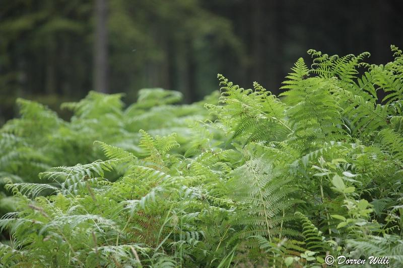 Ballade dans les Hautes fagnes et les sous-bois le 10-08-2011 Img_2663-800x600--2bbd6ab