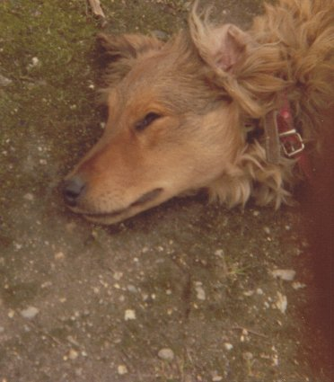 Mon chien Voyou, mes bébés à plumes et compagnie E-et-cie-vouyou-03-2b6096b