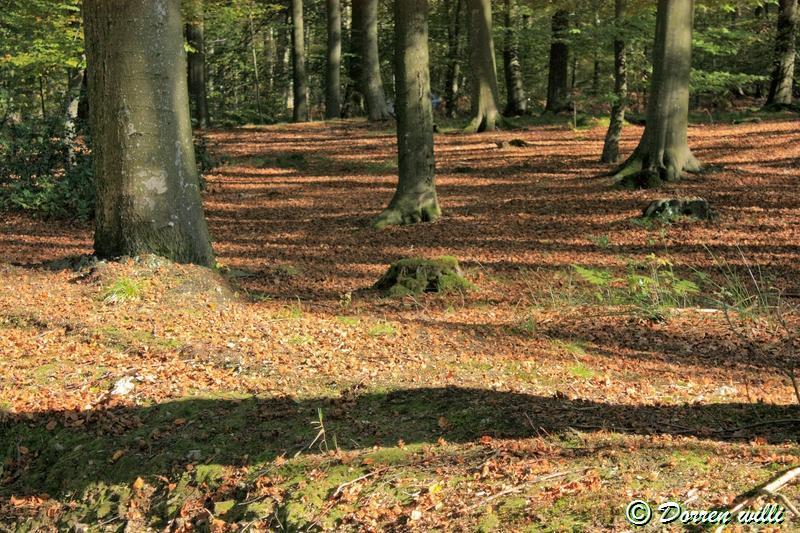 promenade sur les fagnes et alentours ( jalhay ) le 16-oct-2011 Dpp_jalhay---16-o...1---0015-2dd6dea