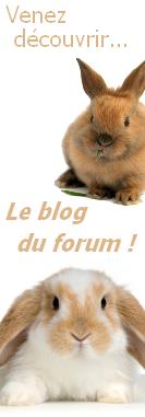 Le blog du forum !